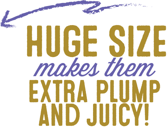 Huge Size makes them Extra Plump and Juicy!
